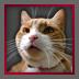 http://quests.armorgames.com/game/15850/media/icon/b75dda22cfc021b8aba41340ce4b8772.png?v=1398788928&vv=1398962097